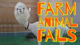 Hilarious Farm Animals Fails 2017   Funny Fail Compilation