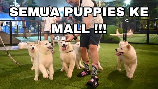BAWA 5 PUPPIES JALAN  - JALAN KE MALL !!!