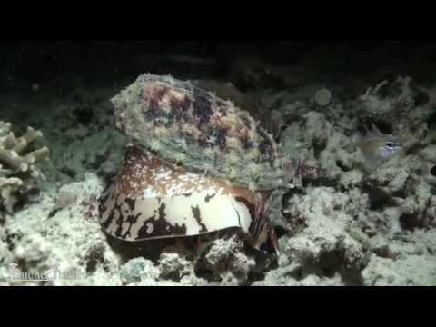 Komodo Tauchsafari mit der MS Wellenreng