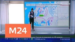 В столицу пришла летняя погода - Москва 24