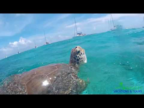 Swimming with Turtles - Tobago Cays (Grendadines Day trip from St. Lucia)