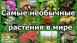 Самые необычные растения в мире.