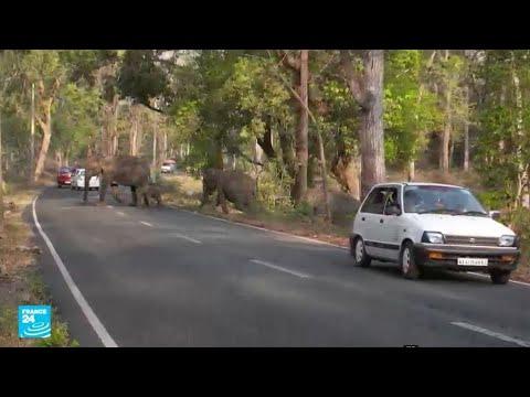 الهند: البشر يزاحمون الحيوانات ويستوطنون بيئتهم الطبيعية !!  - 14:22-2018 / 3 / 23