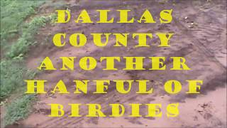 dallas county another handful of birdies