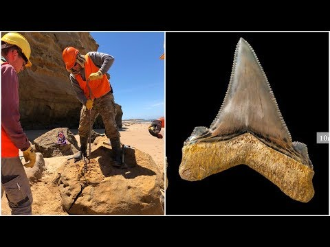 An Australian Scientist Found A Tooth So Big That It's Hard To Believe This Monster Actually Existed