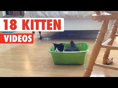 18 Funny Kitten Videos Compilation 2017
