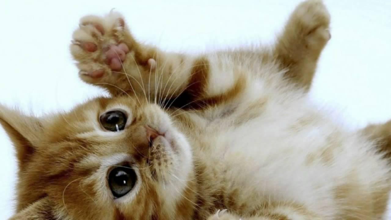 Annonces achat chat à vendre au Québec