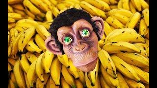 Baby Monkey Banana   Sing and Dance song for kids   동요와 아이 노래   어린이 교육