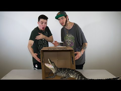 CRAZY WHATS IN THE BOX CHALLENGE!! (ft. FaZe Banks)