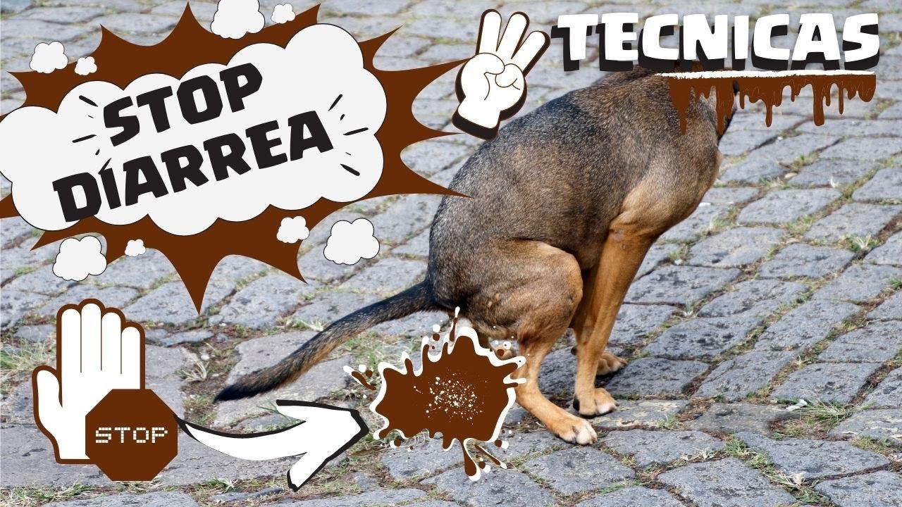 diarrea oscura en perros cachorros