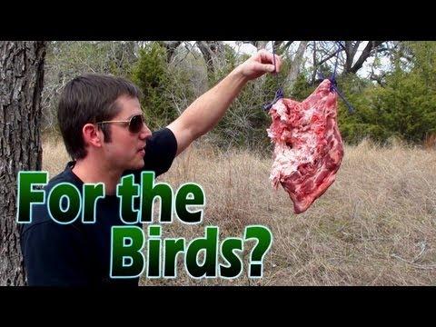 Bird Shot vs Meat (Home Defense Shotgun)