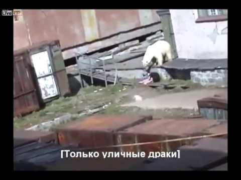 衝撃!オシッコをしていた女性がホッキョクグマに襲われた  Women who had a pee has been attacked by a polar bear
