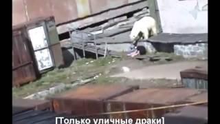 衝撃!オシッコをしていた女性がホッキョクグマに襲われた  Women who had a pee has been attacked by a polar bear 野ション 検索動画 8