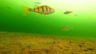 Перед Закатом, Подводная Камера на Рыбалке