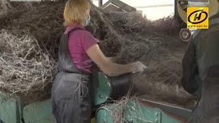 На Кормянском льнозаводе – массовое увольнение работников