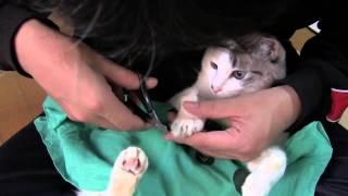 ミーちゃんの爪切りです。今回はとても大人しく爪切りに応じてくれたミ...
