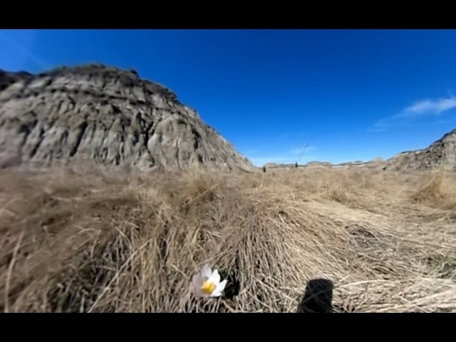 Hiking down Horseshoe Canyon (360 degree video)
