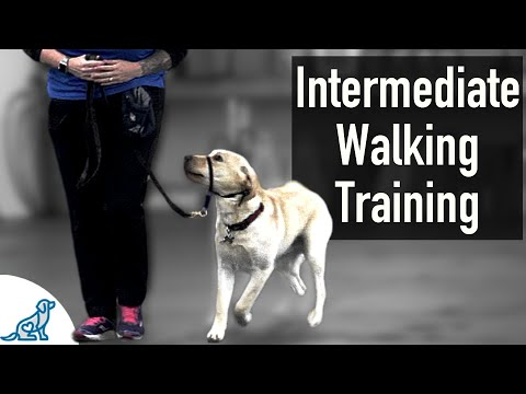 A SIMPLE Trick That Dog Trainers Know For Walking On Leash Training