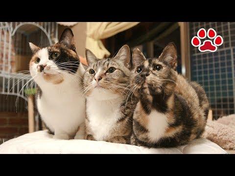 朝から元気な猫達【瀬戸の猫部屋日記】Cats are full of energy from morning