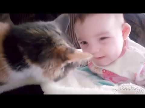 Funny video of Cat and Cute babies Awesome Compilation