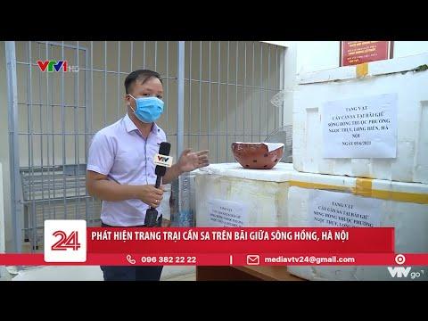 Phát hiện trang trại cần sa trên bãi giữa Sông Hồng, Hà Nội   VTV24