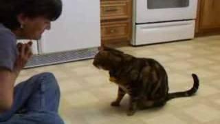 Cat Does Dog Tricks