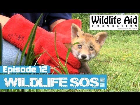 Wildlife SOS Online - Episode 12