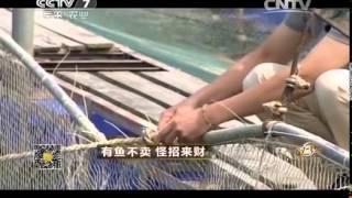 致富经 《致富经》 20141119 有鱼不卖 怪招来财