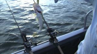 "Fishing the Midwest with Bob Jensen 2012: Episode 7 - ""Flicker Shads on the Bay"""