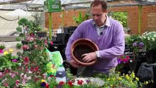 How To Plant A Hanging Basket For Summer Colour - The Pavilion Garden Centre Cork