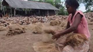 Bristle Fiber Manufacturing Sri Lanka