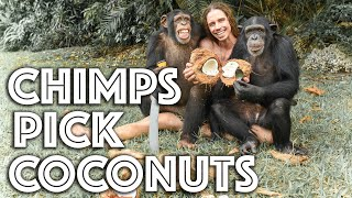 Chimps Pick Coconuts with Kody Antle  Myrtle Beach Safari
