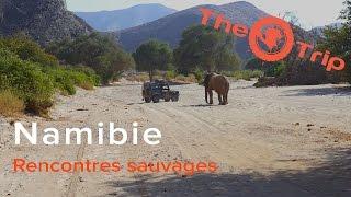 Web série n°11 | Rencontres sauvages | The Trip, sur la trace des explorateurs