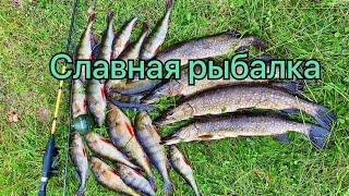 Отличная рыбалка на Карельском озере Изба на берегу озера Большие окуни Ловим спиннингом щуку