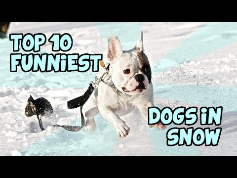 TOP 10 FUNNIEST DOGS IN SNOW OF ALL TIME