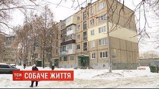Нестерпне сусідство: у квартирі харківської багатоповерхівки жінка тримає понад два десятки собак