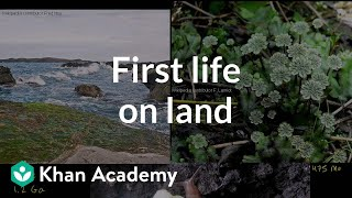 First living things on land clarification | Cosmology & Astronomy | Khan Academy