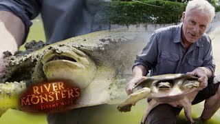 the-giant-softshell-turtle-river-monsters