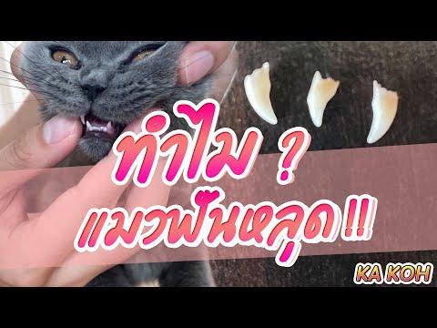 ทำไมแมวฟันหลุด  I OH! MY BOSS EP 24
