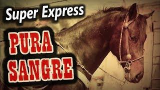 Popurri PURA SANGRE - Super Express (2018)