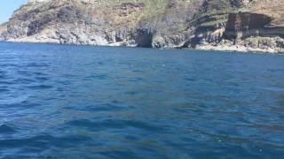 Splendido video di liborio iacono dei delfini ad ischia precisamente alla scannella
