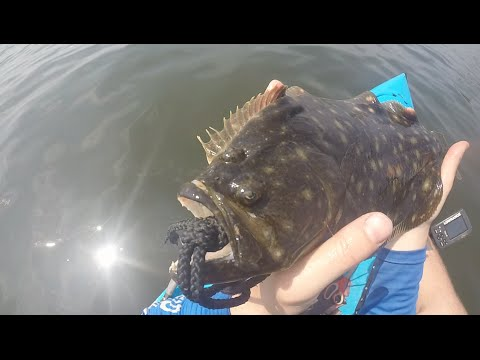 Kayak Fluke Tips and a Day on the Water