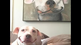 Dog Can't Stop Smiling After Someone Rescues Him
