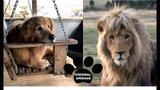 Original Animals #19. CUTE AND FUNNY ANIMALS VIDEO/ МИЛЫЕ И СМЕШНЫЕ ЖИВОТНЫЕ.