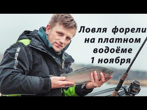 виталий колганов фидер 2017