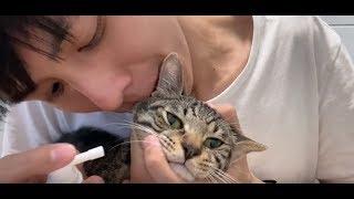【貓日常】幫貓噴藥真的是世界上最難的事,20點求解! | 謝秉鈞Attila |