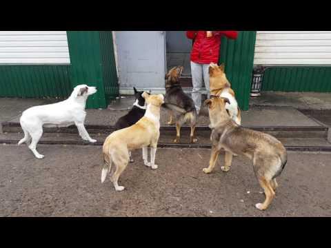 Feeding abandoned Dogs in Chernobyl