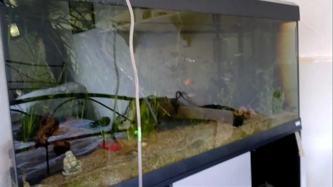 Freshwater fish acclimation - How To Drip Acclimate My Fish