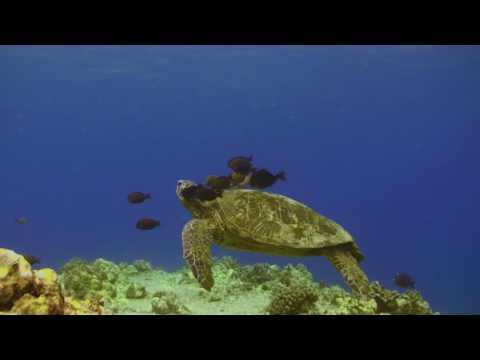 Shore Snorkeling