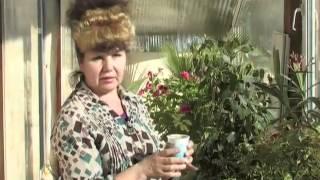 Весенний уход за комнатными растениями(, 2013-03-20T09:53:38.000Z)